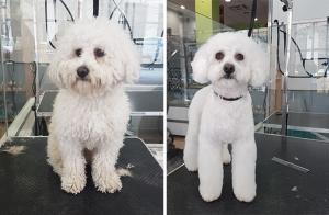 Regálale a tu mascota una sesión completa de corte, lavado y peinado