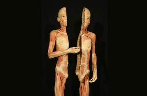 """Exposición """"Human Bodies"""""""